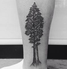 Sequoia Red Wood tree for @jess_newfield Thanks so much!! #redwoods #californialove #californiatattoo #blackwork #blackart #btattooing #dotwork #dotworktattoo #dotworkers #linework #xstattoomontreal #xstattoo #quebectattooshops #flashworkers #montrealtattooartist by ahadejia