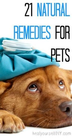 natural home remedies for cats and dogs 21 Natural Remedies For Pets That Will Make Your Pet Feel Healthy Again Without The Need To Visit Vet Love My Dog, Puppy Love, Animals And Pets, Cute Animals, Fu Dog, Pet Grooming, Pet Health, Health Care, Health Tips