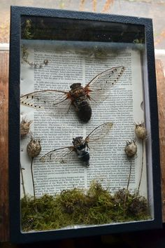 The Jackass Gardener — wolftea: cicada display Shadow Box Art, Arts And Crafts, Diy Crafts, Witch Aesthetic, Wow Art, Assemblage Art, Nature Crafts, Art Projects, Insects