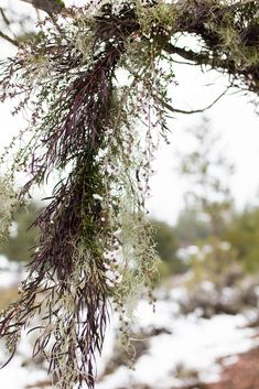Moody winter wedding inspiration in the snow at Frazier Park, Ca Wedding Planning Tips, Wedding Tips, Wedding Details, Wedding Styles, Purple Wedding, Floral Wedding, Frazier Park, Greenery Decor, Purple Themes
