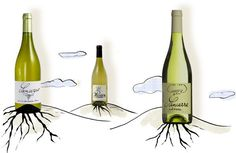 'Listening' to Sancerre Tell Its Story - NYTimes.com