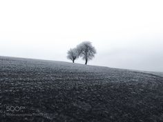Distant Trees in the Mist by ChristinaObermaier