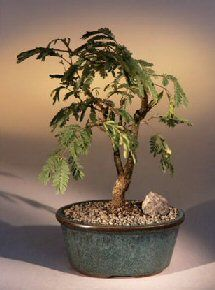 Brown Plastic Bonsai Landscape Drip Tray
