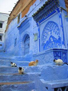 Chats sur des escaliers bleus !!!! ♥ tout ce que j'aime ! ;)
