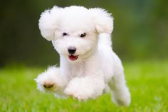 "From the most popular dog breeds to famous dogs in literature, these ""pawsome"" dog facts are sure to make even the most devoted cat lovers change their minds. White Puppies, White Dogs, Dogs And Puppies, My Dog Died, Female Dog Names, Dog Facts, Dog Runs, Puppy Breeds, Old Dogs"