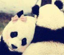Panda mascot costume is one of the most popular costume among buyers. Panda is a cute and honest animal which is also national treasure of China, it only exist in China. Panda Kawaii, Niedlicher Panda, Pink Panda, Cute Panda, Happy Panda, Baby Animals, Funny Animals, Cute Animals, Beautiful Creatures
