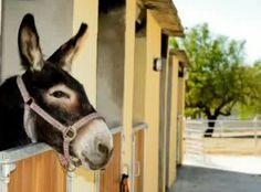 Visitem l'escola-pony club granja a sortir amb nens #sortirambnens
