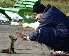 High Five With A Squirrel -- Adorable; also adorable is I taught my kitty!