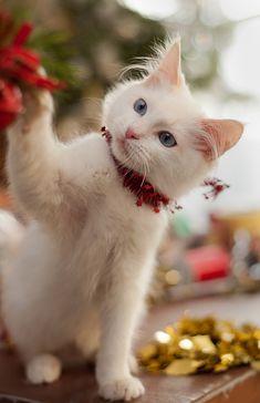 Kitty's Christmas
