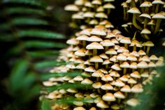 Magic Mushrooms by Kimber Leigh - the secret world of mushrooms. #nature #photography