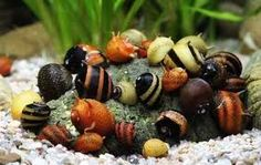 Nerites sp. snails.  Nerites are excellent algae eaters, don't eat plants, and don't reproduce in aquaria.