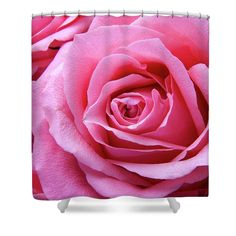Roses Shower Curtain featuring the photograph Roses Pink