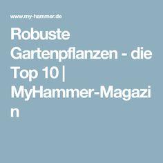 Robuste Gartenpflanzen - die Top 10 | MyHammer-Magazin