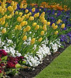 Beautiful flower border