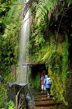 Levada walking on Madeira Island, Portugal