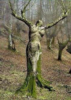 Mother Nature. Not really a statue but looks like one.