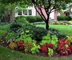 Shade garden beds with red/burgundy from Coleus  green from Hosta  Potato Vine... Love this! Gonna try it around my big oak tree in the front yard! Though I might add some caladiums and impatiens as well!