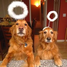 Little angels! Sorry your owner put those silly things on your head.. lol ..mh