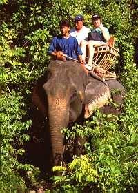 Ride Elephants in Phuket, Thailand.