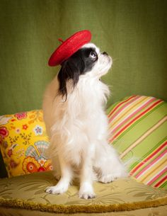 Dog Beret Red Small Quality Wool Felt Hat by Doginafez on Etsy