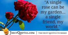 We have the best quotes about friendship. Find the perfect quotes to share with your friends and your best friend. We have picture quotes for each. Best Friend Quotes, Your Best Friend, Best Quotes, Leo Buscaglia, Best Friendship Quotes, Perfection Quotes, Picture Quotes, Really Cool Stuff, Clarice Lispector