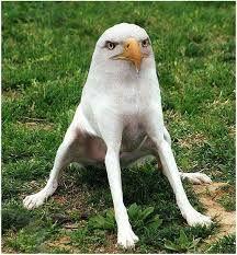 bird of prey dog