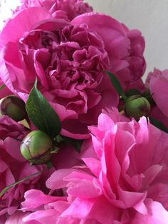 Failure To Thrive, Pink Clouds, A Day In Life, Pink Tulips, Most Romantic, Beautiful Gardens, Peonies, Flora, Plants