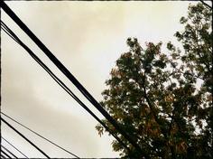 538 - Nublado #umafotopordia #picoftheday #brasil #brazil #n8 #snapseed #pixlromatic+