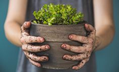 There are plenty of sources of probiotics! Playing outside in the garden, eating fermented foods, driving with the windows down, or just visiting the farmers market are great ways to introduce some pretty awesome bacteria to your body. — Cultured Guru