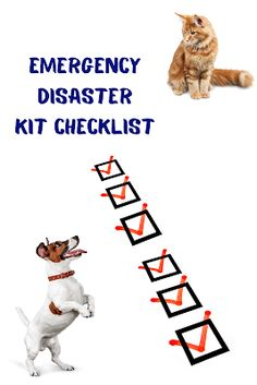 Summertime is Here! Do You Have an Emergency Disaster Kit for Your Pet? #Gene'sChicagolandMortgageBlog #PetEmergencyDisasterKit #Preparedness #WeatherEvents Veterinarian Office, Disaster Kits, New Lenox, Pet Friendly Hotels, Animal Faces, Pet Toys, Lincoln, Manhattan, Your Pet
