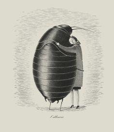 Blatte by Giulia Ghigini, via Behance. I really wish this could have happened in Kafka's metamorphosis.
