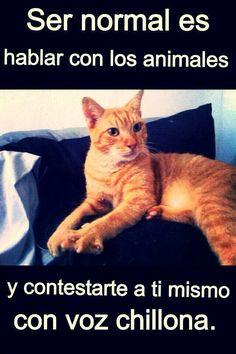 """¡Somos Normales!"" #EstrechaSuPata #NoAlMaltratoAnimal"