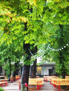 ღღ Prater Garten, Berlin Germany. © Marjan Ippel