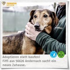 Fiffis Besitzer sind leider krank geworden, sodass sie jetzt im Tierheim Andernach ist. http://www.tierheimhelden.de/hund/tierheim-andernach/mischling/fiffi/6882-0/ In ihrem ehemaligen Zuhause war Fiffi auch etwas pummelig. Inzwischen sitzt die Modelfigur und sie freut sich, lange Spaziergänge mitzumachen. Hundeerfahrung sollte für die anhängliche Hündin vorhanden sein. Erkennt sie die konsequente Führung, ist sie vom Schmusen nicht mehr abzuhalten.