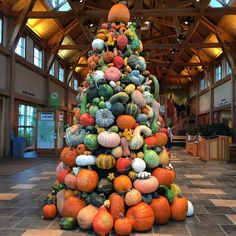 At the Arboretum Minnesota Pumpkin Farm, Pumpkin Tree, Pumpkin Varieties, Minnesota Landscaping, Prior Lake, White Bear Lake, Autumn Display, Autumn Scenery, Happy Fall Y'all