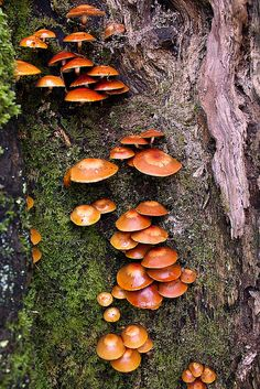Mushrooms by GraBor, via Flickr
