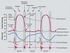 Wiggers diagram nursing infoeducation pinterest diagram heart pressure google search ccuart Images