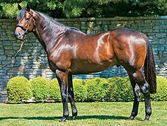 leading sire Scat Daddy