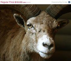 ON SALE Digital download Wild animal by sunshineartdesign on Etsy