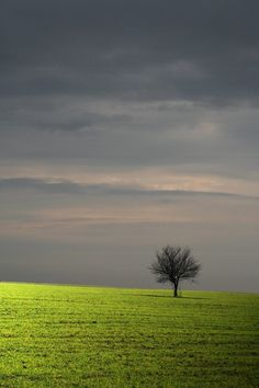 I love the lonely tree in the middle of the field