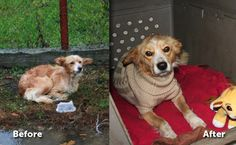 Drenched in Icy Rain, Homeless Dog Is Wearing Sweater 1 Day Later