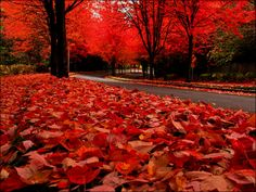 Fall leaves... Soooooo beautiful