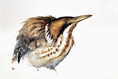Karl Martens, BITTERN Watercolor Bird, Watercolor Animals, Watercolor Paintings, Watercolours, Watercolor Techniques, Painting Techniques, Karl Martens, Pen And Wash, Detailed Paintings