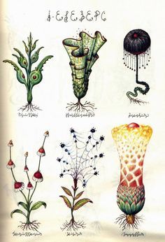 otherwordly illustrations taken from Luigi Serafini's masterpiece Codex Seraphinianus, a fantastical encyclopedia of the unknown completed b...