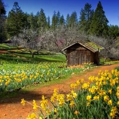 spring flowers wallpaper – Merche Fernández – Join in the world of pin Old Cabins, Yellow Sky, Winter Cabin, Farms Living, Down On The Farm, Blue Wallpapers, Flower Wallpaper, Spring Wallpaper, Country Life