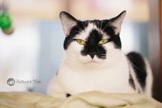 At Pets Come First in Centre Hall, PA. #shelter #petscomefirst #adopt #kitty #cat #white #black #heart #danielle