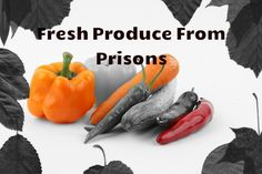 The Missouri Department of Corrections' Restorative Justice Garden Program donated 91 tons of fresh produce in 2015 to local food pantries, shelters, churches, nursing homes and other organizations…