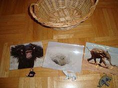 Djurmodeller och bildkort som är foton av djuren i verkligheten. Dessa introduceras för barnet efter en utflykt till zoo där barnet får se djuren i verkligheten. Barnet är 16 månader.