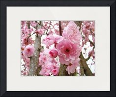 """""""BLOSSOMS PINK TREE Blossoms Flower Art Prints"""" by Baslee Troutman Fine Art Prints, NORTHWEST // <p><b><big>PINK SPRING BLOSSOMS, TREE BLOSSOMS, Art Print, Canvas Art, Framed Artwork, Greeting Cards Spring Blossoms</big><br> Garden Art, Spring Flowers, Flower Art Landscapes Art Series</b><br> Baslee Troutman Art Collections.  High Quality Giclee Fine Art Prints for Home... // Imagekind.com -- Buy stunning fine art prints, framed prints and canvas prints directly from independent working…"""