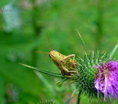 "Photo ""Happy Grasshopper"" by teewhyell"